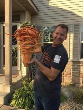 """Nông dân Mỹ trồng được cà rốt to nhất thế giới nhờ """"chút may mắn"""" - 2"""