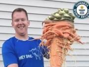 Nông dân Mỹ trồng được cà rốt to nhất thế giới nhờ  chút may mắn