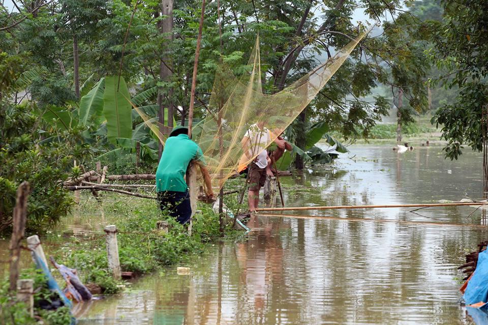 Chương Mỹ - Hà Nội: Làng mạc biến thành sông, dân vật lộn trong biển nước - 13