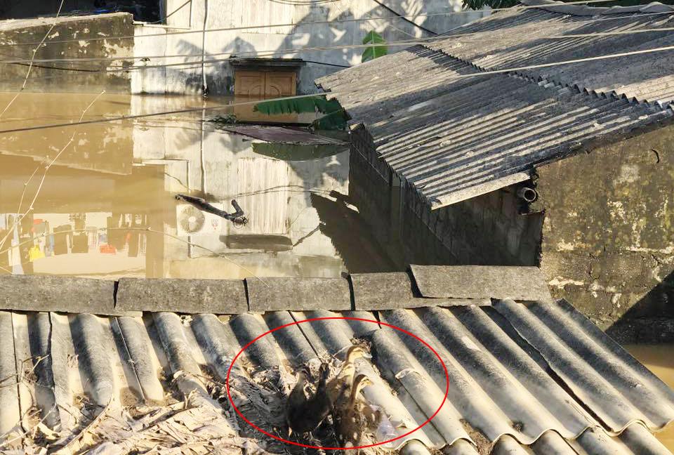 Xót xa nhìn cảnh người dân chống chọi lũ lụt, sống chơi vơi trên nóc nhà - 13