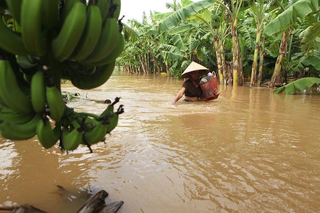 Các bệnh thường gặp sau lũ lụt - 1