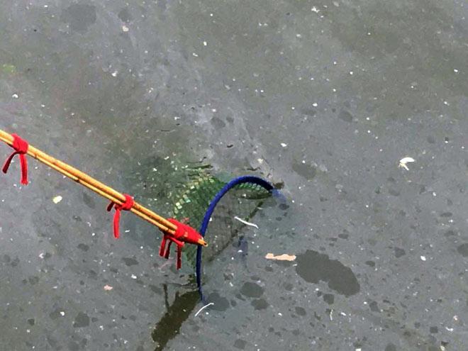 """Người lớn, trẻ nhỏ đua nhau vợt cá trên kênh """"chết"""" ở Sài Gòn - 6"""