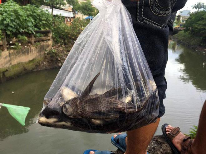 """Người lớn, trẻ nhỏ đua nhau vợt cá trên kênh """"chết"""" ở Sài Gòn - 10"""