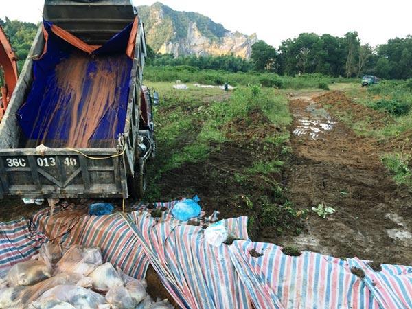 Chùm ảnh: Tiêu hủy gần 6.000 con lợn chết trong lũ tại Thanh Hoá - 1