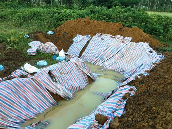 Chùm ảnh: Tiêu hủy gần 6.000 con lợn chết trong lũ tại Thanh Hoá - 3