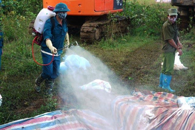Chùm ảnh: Tiêu hủy gần 6.000 con lợn chết trong lũ tại Thanh Hoá - 4