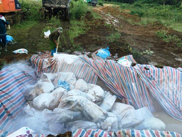 Chùm ảnh: Tiêu hủy gần 6.000 con lợn chết trong lũ tại Thanh Hoá - 6