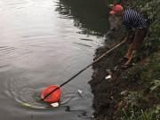"""Người lớn, trẻ nhỏ đua nhau vợt cá trên kênh """"chết"""" ở Sài Gòn"""