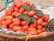 Những vị thuốc quý từ quả nhót