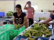 """Thị trường - Tiêu dùng - Chỉ trồng chuối thôi, anh nông dân """"bỗng"""" thành tỷ phú"""