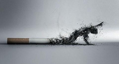 Những hình ảnh khiến ta rùng mình về tác hại của thuốc lá - 4