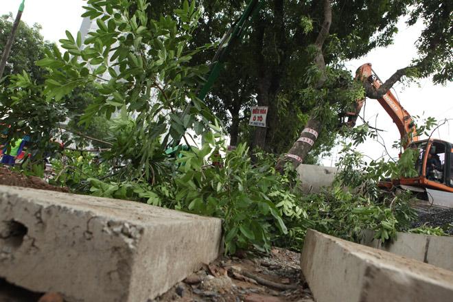 """HN: """"Chia tay"""" gần 1.300 cây xanh đường Phạm Văn Đồng - 9"""