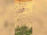 Kinh hãi cảnh máu phun lên từ đụn cát trên bãi biển ở Úc