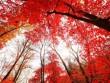 """""""Rụng tim"""" trước cảnh đẹp tựa xứ thần tiên khi trời vào thu ở Trung Quốc"""