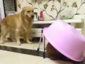 """Đến chó còn biết """"úp sọt"""" gái"""