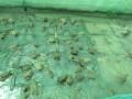 Cho ếch ngồi trên, cá trê bơi ở dưới, 3 tháng lãi 35 triệu