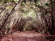 Những địa điểm đầy rẫy linh hồn được thợ săn ma ghé thăm nhiều nhất