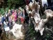"""Dân Trung Quốc tìm thấy hàng loạt """"nấm vua"""" khổng lồ"""