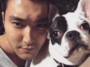 Hết vụ chó cưng cắn chết người, sao Hàn lại bị chỉ trích vì vạ miệng