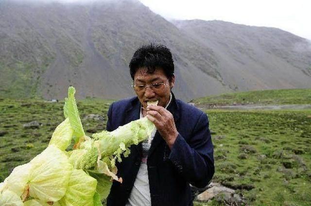 Lạ lùng giống cải thảo cao 2 mét, giá tiền triệu một cân - 4