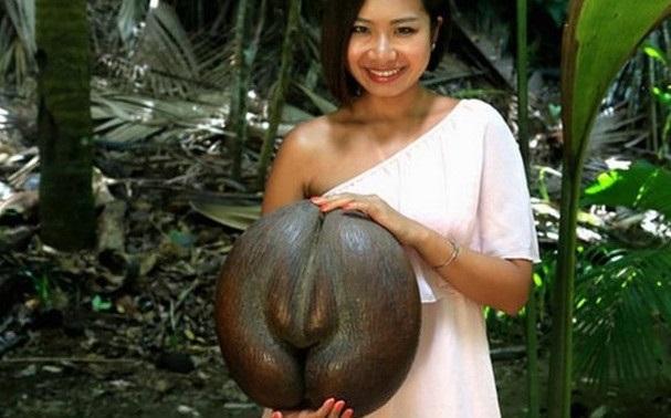 """""""Nhân sâm"""" trong giới trái cây: hình thù """"tế nhị"""", giá chỉ 170 nghìn đồng/quả - 4"""
