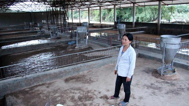 Khánh Hòa: Khóc nghẹn nhìn lũ cuốn hàng trăm con heo - 1