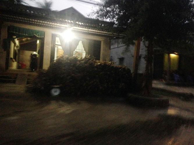 Thanh Hóa: Thương lái Trung Quốc đổ xô mua cây Ba Chạc? - 4