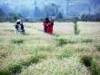 Kinh nghiệm bỏ túi cho dân phượt Hà Giang mùa hoa tam giác mạch
