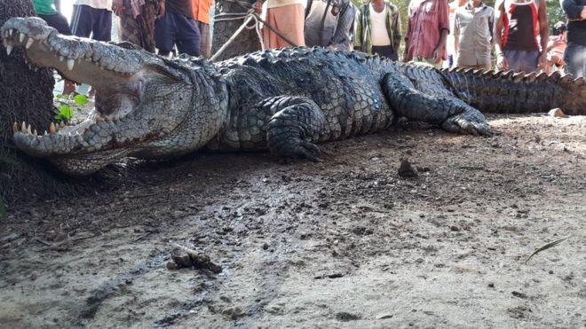 Cá sấu khổng lồ lẻn vào nhà, cả làng Ấn Độ cãi nhau tìm cách xử - 1