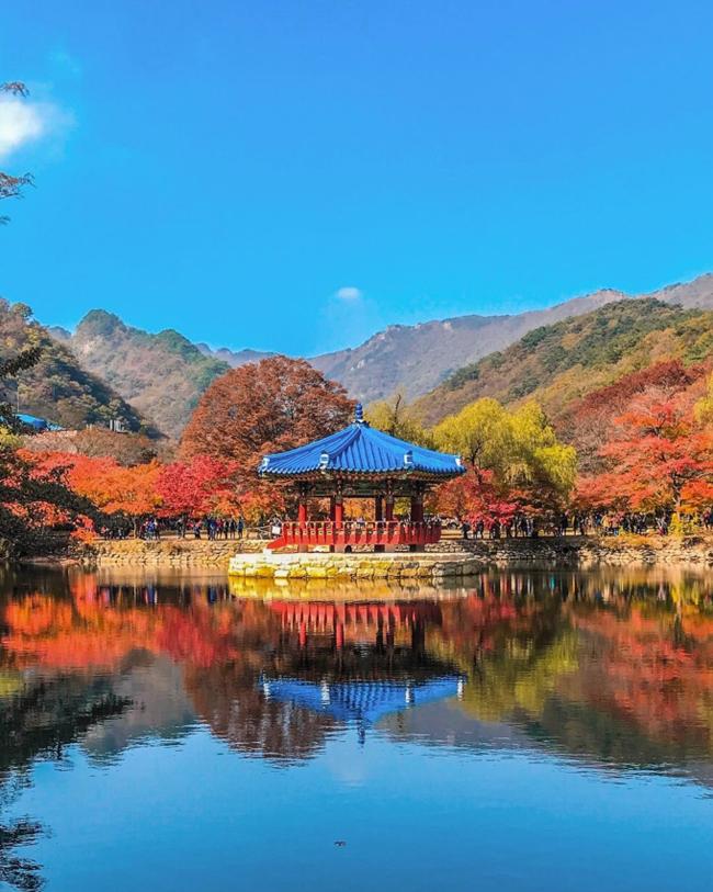 1. Mùa thu tại các Vườn Quốc gia:  Khung cảnh núi rừng tại các vườn quốc gia ở Hàn Quốc được xem là nơi giao thoa rõ nét nhất của các mùa trong năm, và mùa thu hiển nhiên trở thành một bức tranh sơn dầu vàng ươm pha thêm chút đỏ nâu của lá phong. Có đến 20 vườn quốc gia lớn đổi sắc tuyệt đẹp khi mùa thu sang, nhưng theo người Hàn thì 5 vườn quốc gia bên dưới chính là linh hồn của mùa thu trên đất nước họ. (Ảnh: Vườn Quốc gia Naejangsan, nếu bạn hỏi mùa thu ở đâu đẹp nhất thì người Hàn sẽ đưa bạn đến đây ngay)