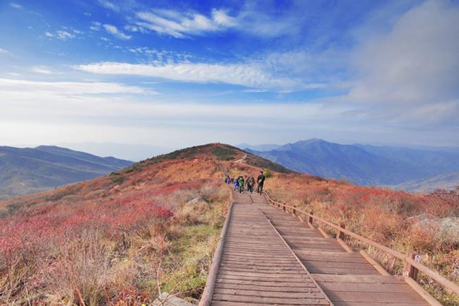 Vườn Quốc gia Odaesan thu hút người Hàn bởi những con đường cao bắc qua các ngọn núi, đi trên những con đường ở đây thì tha hồ mà ôm cả núi rừng Hàn Quốc vào lòng.