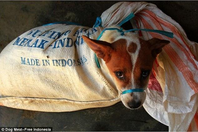 Rợn người cảnh chặt đầu trong lò mổ chó ở Indonesia - 2