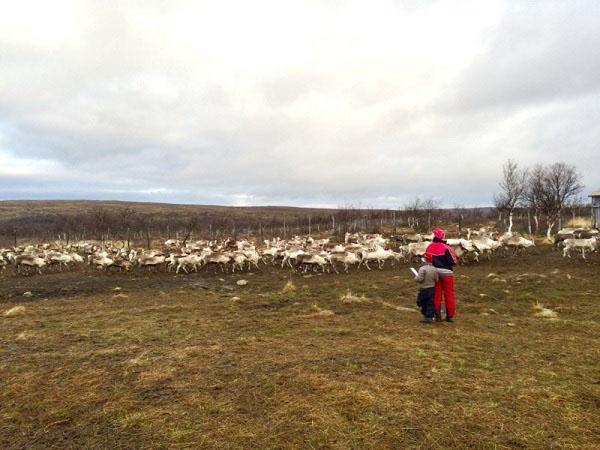 Học sinh Phần Lan theo chân tuần lộc học tích hợp - 2