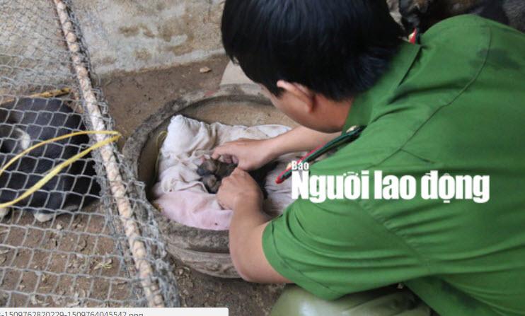 """Được cứu khỏi """"cẩu tặc"""", 2 chú cún chào đời tại trụ sở công an - 4"""