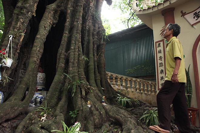 Lạ kỳ cây thị nghìn tuổi, chỉ có 1 quả mỗi mùa ở Hà Nội - 8
