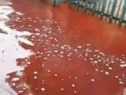 Clip: Rùng mình máu động vật từ các lò mổ gây ngập lụt khu dân cư
