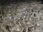 Thế giới - Mộ cổ 2.400 năm chứa dấu tích của giới quý tộc Trung Quốc