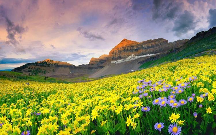"""""""Đứng hình"""" trước những thung lũng hoa quyến rũ nhất hành tinh - 3"""