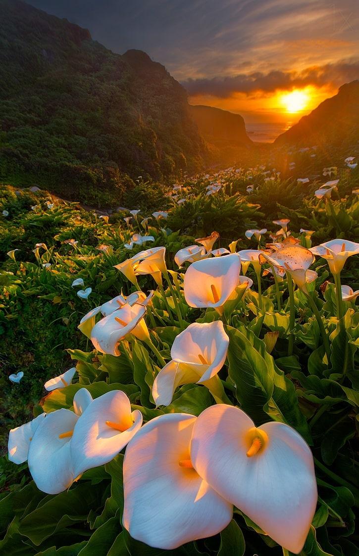 """""""Đứng hình"""" trước những thung lũng hoa quyến rũ nhất hành tinh - 4"""