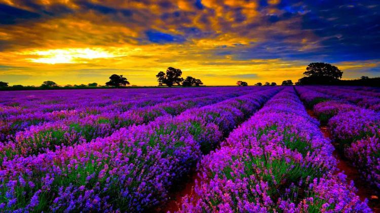 """""""Đứng hình"""" trước những thung lũng hoa quyến rũ nhất hành tinh - 6"""