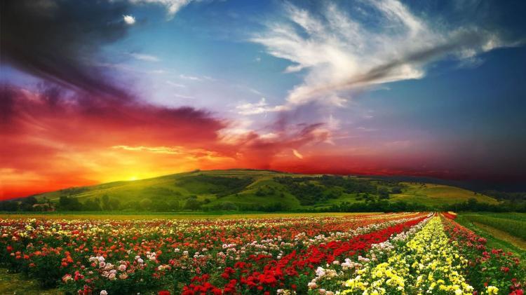 """""""Đứng hình"""" trước những thung lũng hoa quyến rũ nhất hành tinh - 2"""