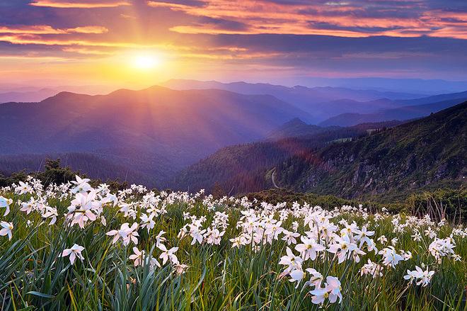 """""""Đứng hình"""" trước những thung lũng hoa quyến rũ nhất hành tinh - 1"""