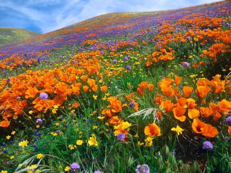 """""""Đứng hình"""" trước những thung lũng hoa quyến rũ nhất hành tinh - 5"""