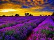 """""""Đứng hình"""" trước những thung lũng hoa quyến rũ nhất hành tinh"""