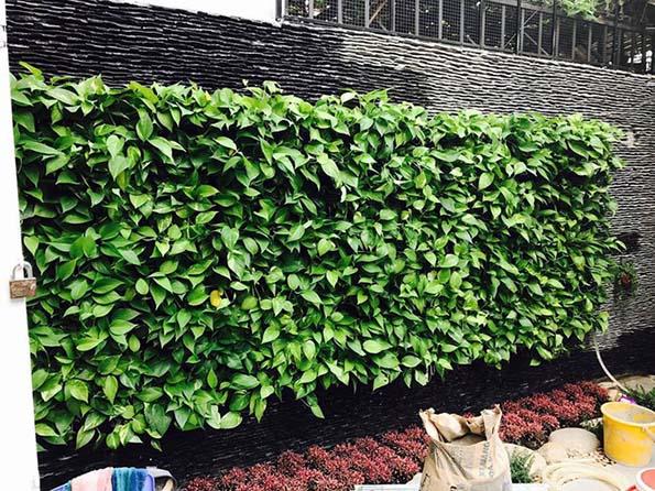 Nhà đẹp của sao: Căn nhà tiền tỷ tự thiết kế của Hồ Quang Hiếu - 6
