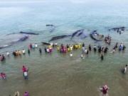 Hành động của dân Indonesia khi thấy 10 cá voi khổng lồ dạt bờ