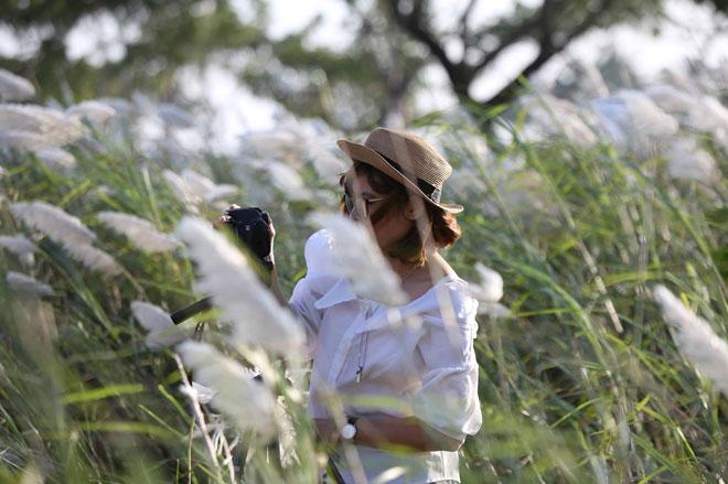 Du khách mê mẩn với hoa lau nở trắng Sơn Trà - 10