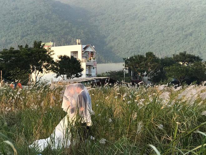 Du khách mê mẩn với hoa lau nở trắng Sơn Trà - 4