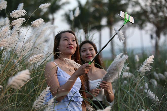Du khách mê mẩn với hoa lau nở trắng Sơn Trà - 13