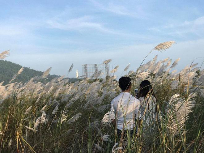 Du khách mê mẩn với hoa lau nở trắng Sơn Trà - 9